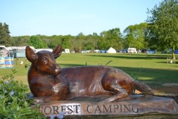 <b>Forest Camping, Suffolk Campsite Photo:</b><br>Welcome to Forest Camping